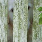 Peeping Through The Gate