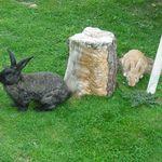 peter and hunny bunny