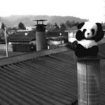 T.Bear Photo