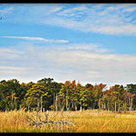 Pinelands, Nj
