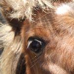 pixy pony