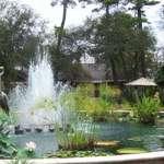 Bird Fountain
