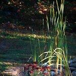 Sunlit Cattails