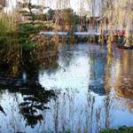 Pond thru Weeping Willow Fronds