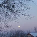 Prairie Winter Night