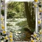 Floral Creek