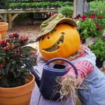 Pumpkin Farmer Too