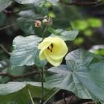 Raro Flower #2
