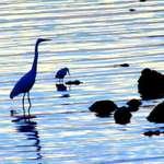 Heron's Reflection