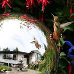 Reflections in Mirrorball, Hummingbird & Garden