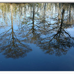 Reflections on Brice&#39;s Creek 2