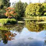 Reflections at the VanDusen Gardens