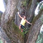 Rick in the big tree