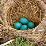 Robin&#39;s Nest