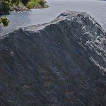 Rock Art Fern and Seagul