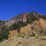 Rocky MTN Fall Colors