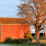 Sunset's Rosy Glow on Barn & Tree
