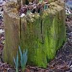 Stump..