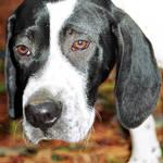 sad soul full puppy eyes
