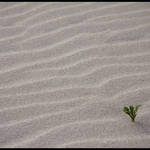 Sand Rippples