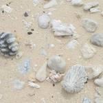 Sand, Shells, Stones
