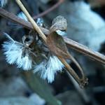 November Seeds