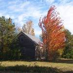 shingle mill in fall