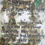 Wildflower Prayer