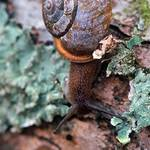 Snail on Log - vertical