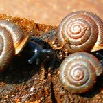 The Posing Snails