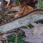 A snake in the woods