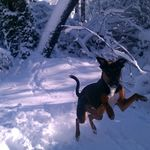 Snow Dog GO!