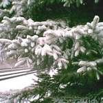 Tracks with Snow 2