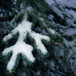 Snowflake on the Pine