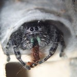 Spider Eating Larva