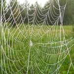 Orb Web