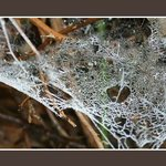 Orbweb diamonds