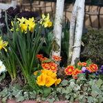 Spring Planter Flowers