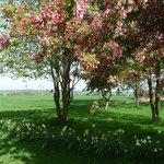 Springtime in Hertfordshire