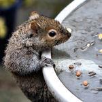Squirrel - Life's a Struggle