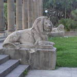 Lion Around