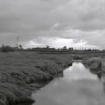 Waikato Stream