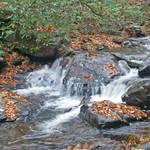 November Stream