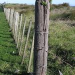 Stump Plant
