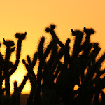 Summer Sunset In Arizona