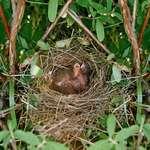 Babies birds