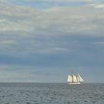 Sun sails