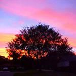 Sunrise in Palmetto