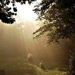 Foggy Morning Rays