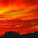 Scarlet Skies